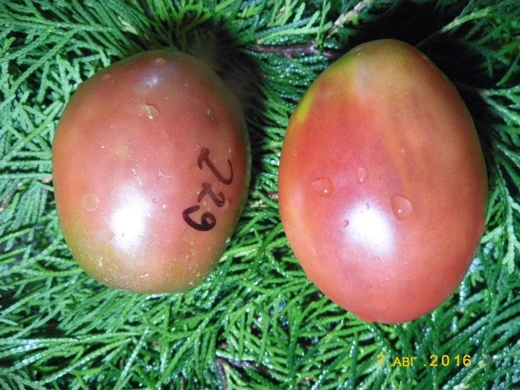 томат фиолетовый русский фото спелых плодов