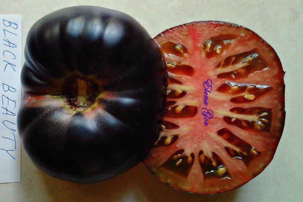 томат черная красота фото