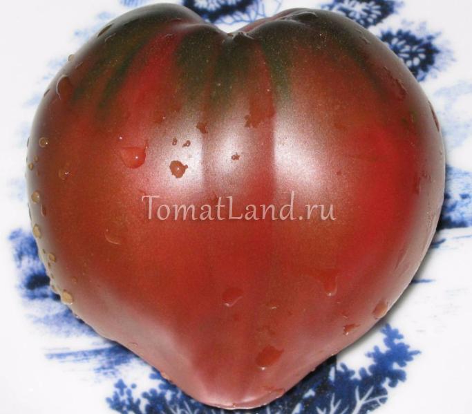 помидоры пурпурное сердце фото