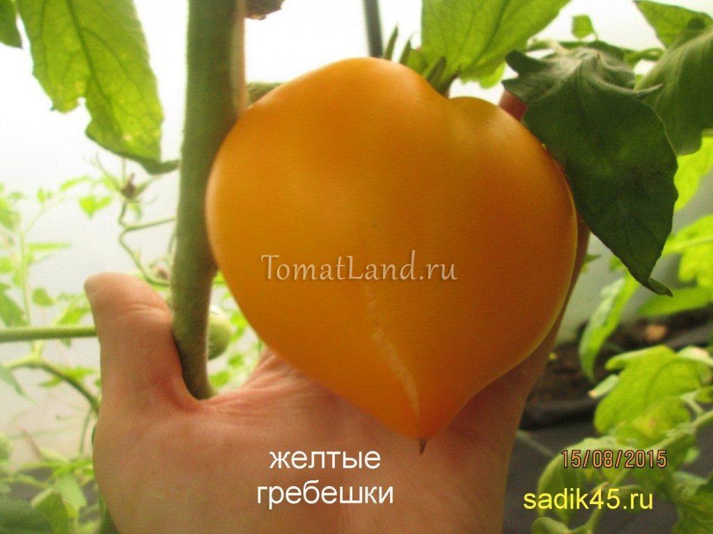 помидоры гребешки желтые фото