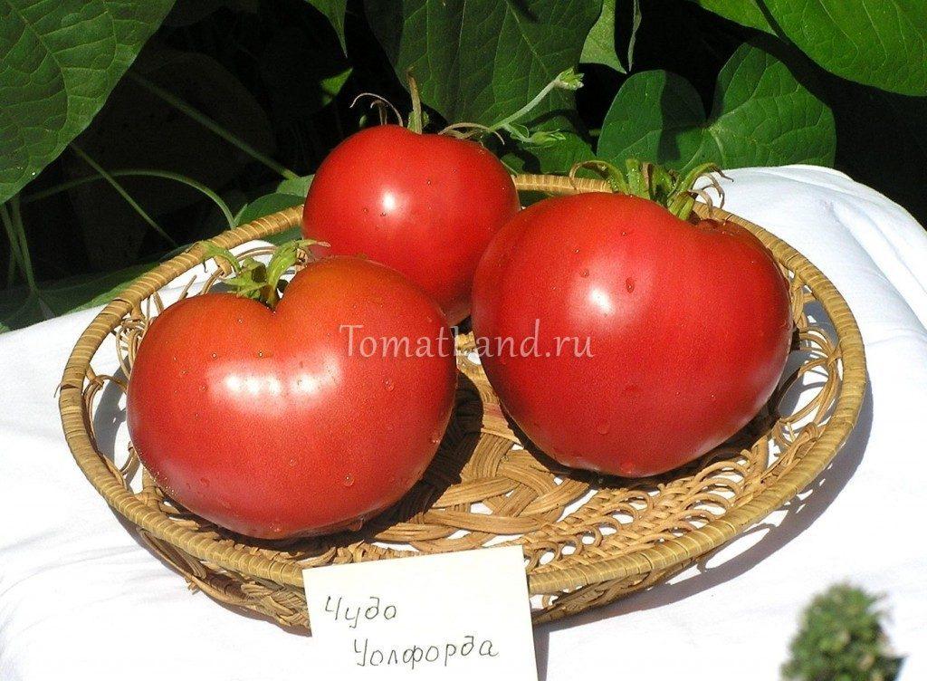 помидоры чудо уолфорда фото