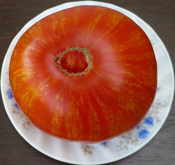 помидор Копия фото
