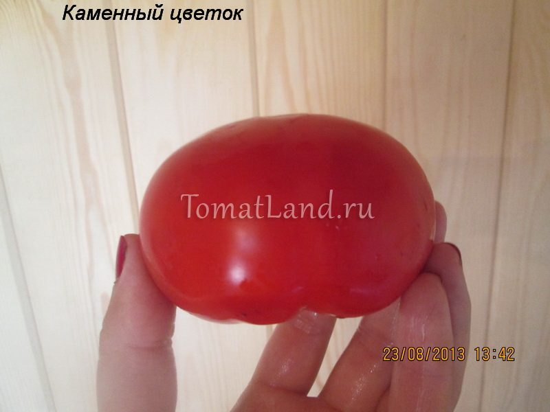 томат Каменный цветок