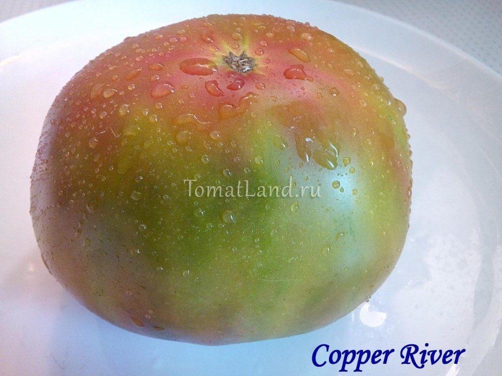 томаты медная река фото отзывы