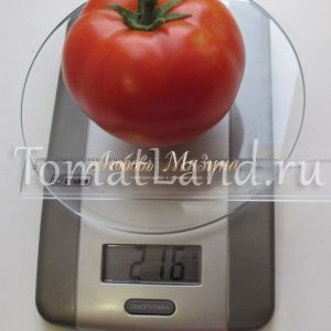 томат Суперприз