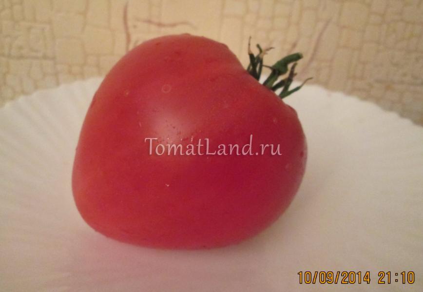 томат африканская лиана фото