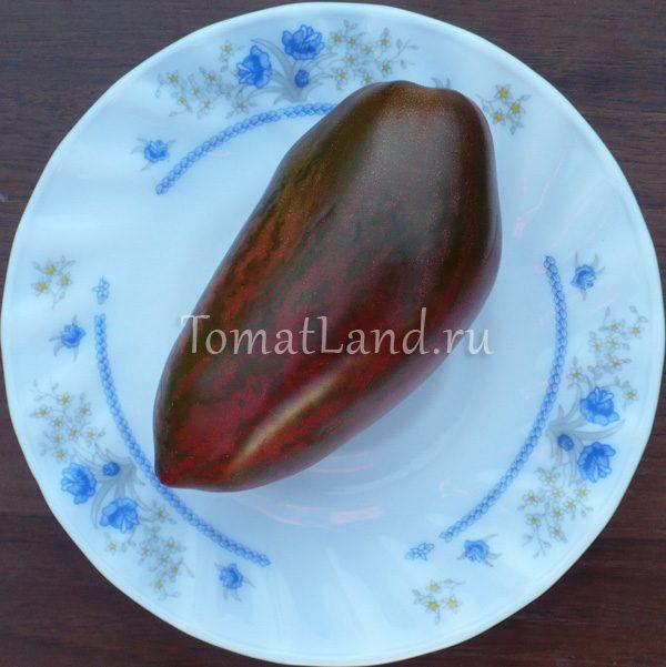 томат зуб кабана фото спелых плодов