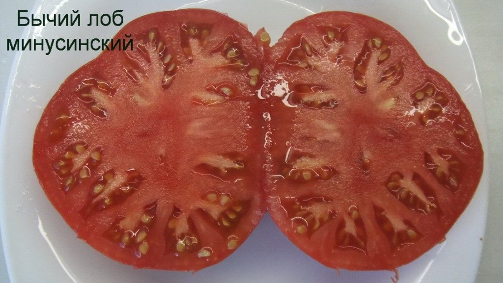 томат бычий лоб минусинский в разрезе