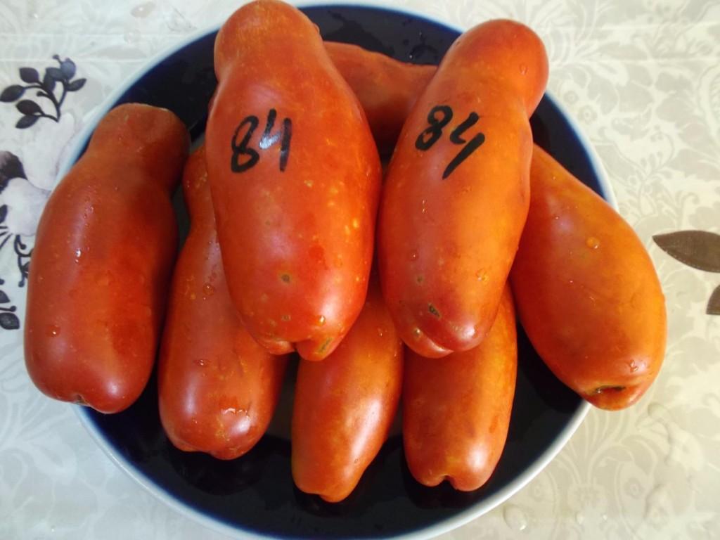 помидоры казанова фото
