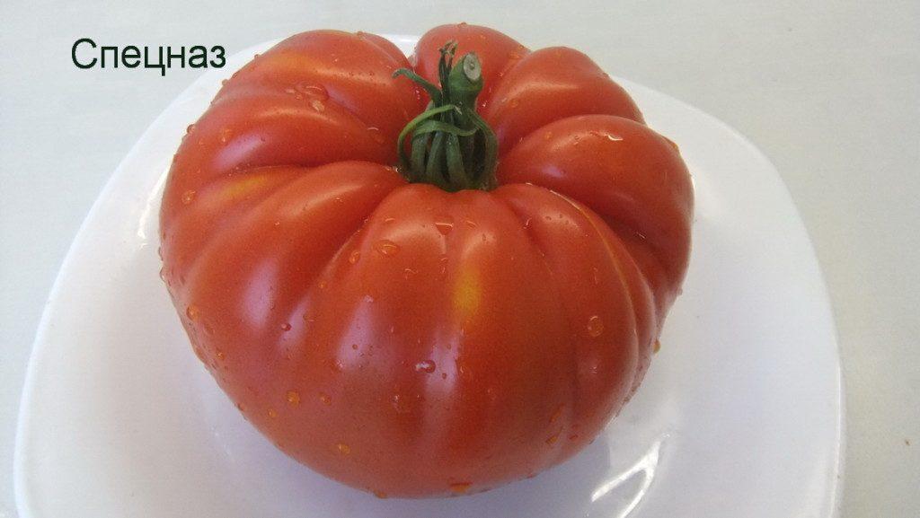 помидоры спецназ фото спелых плодов