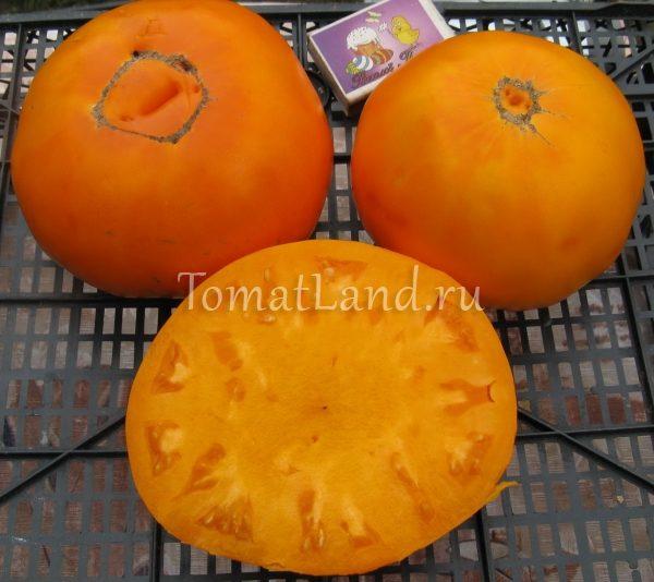 помидоры Весы фото