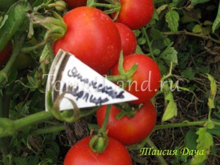 томаты японский карлик отзывы характеристика