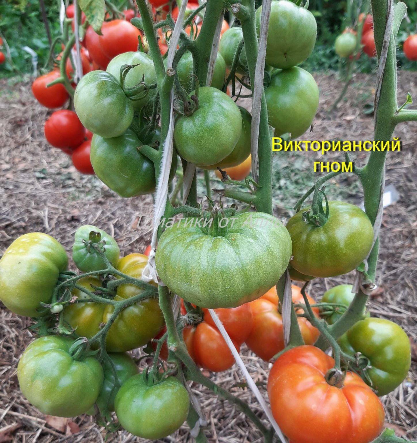 название томатов для теплиц без пасынкования