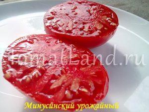 томаты минусинские урожайные фото отзывы