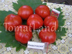 помидоры анастасия фото