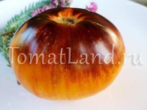 помидор з 20 +фото отзывы