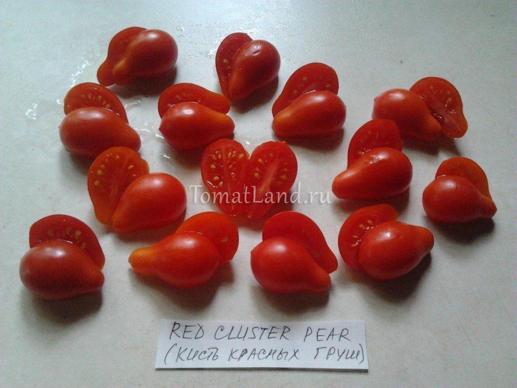 томаты кисть красных груш фото
