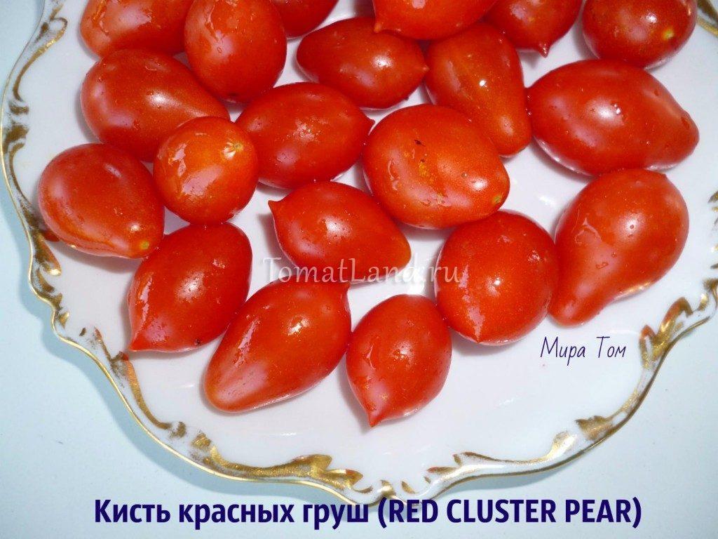 томат кисть красных груш