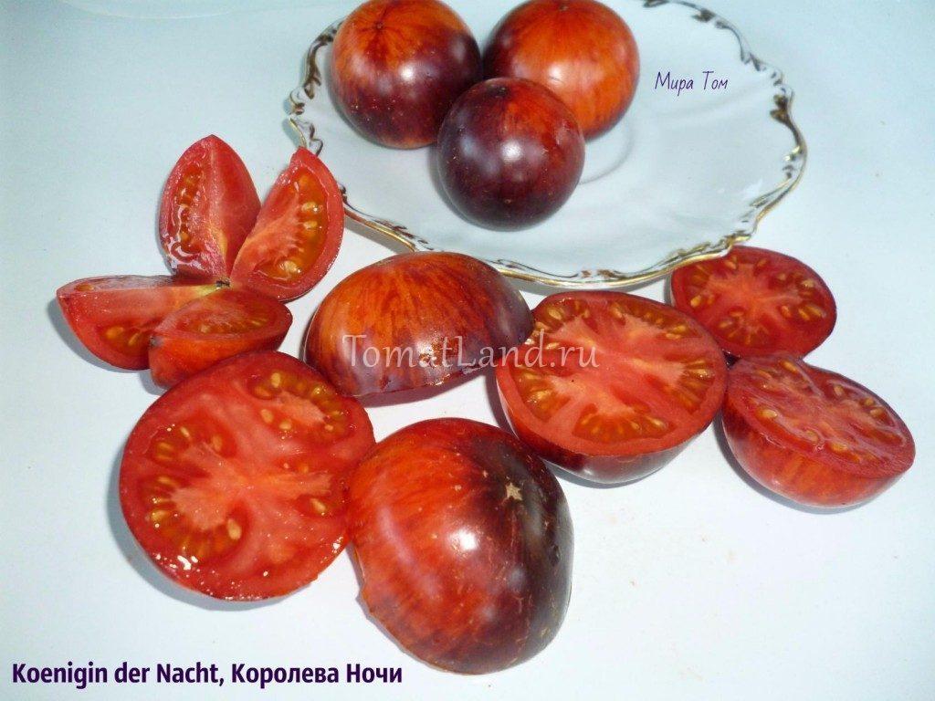 томаты королева ночи фото