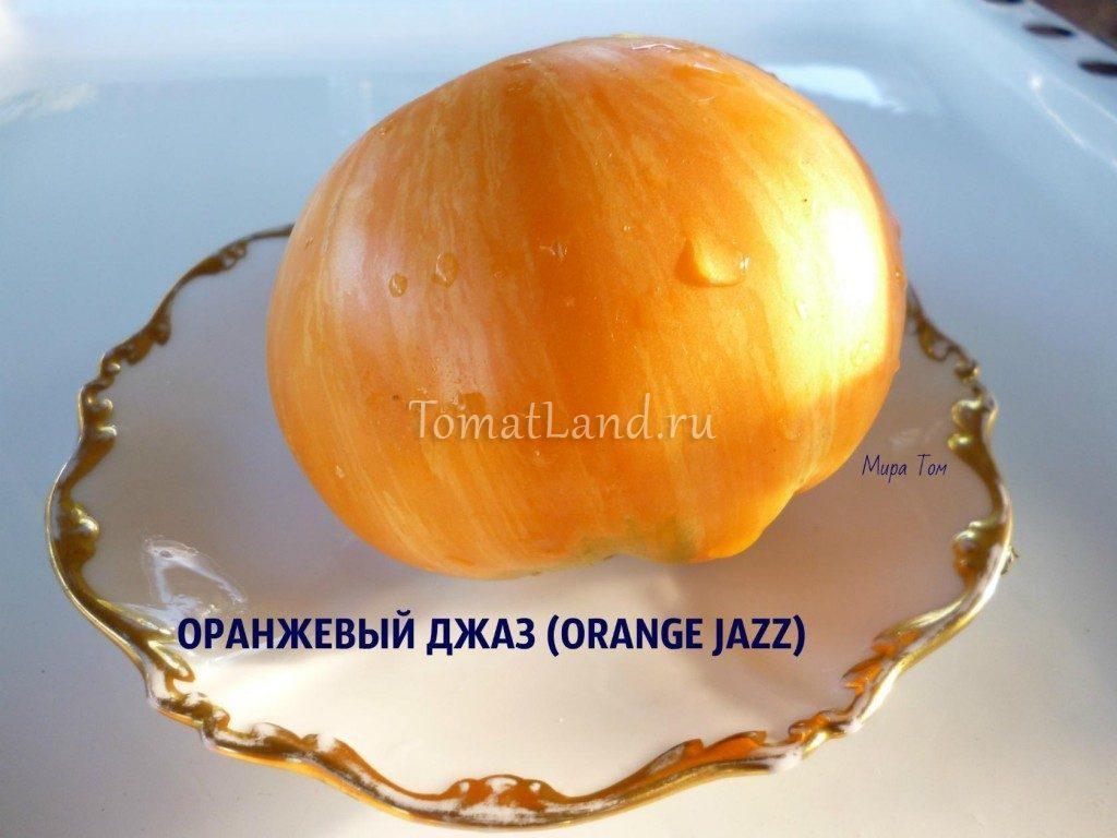 помидоры Оранжевый джаз
