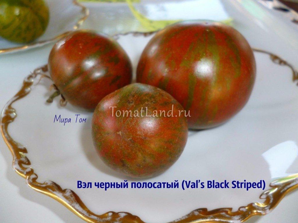 помидоры Вэл черный фото спелых плодов