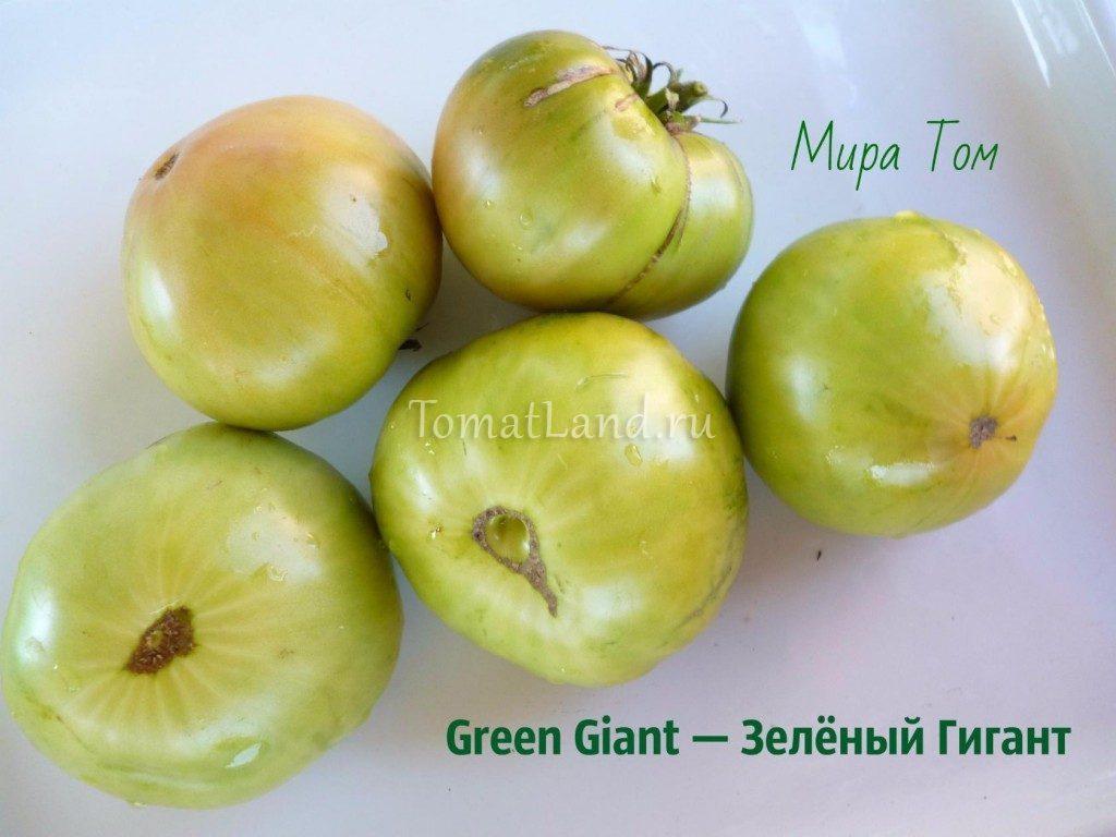 помидоры зеленый гигант