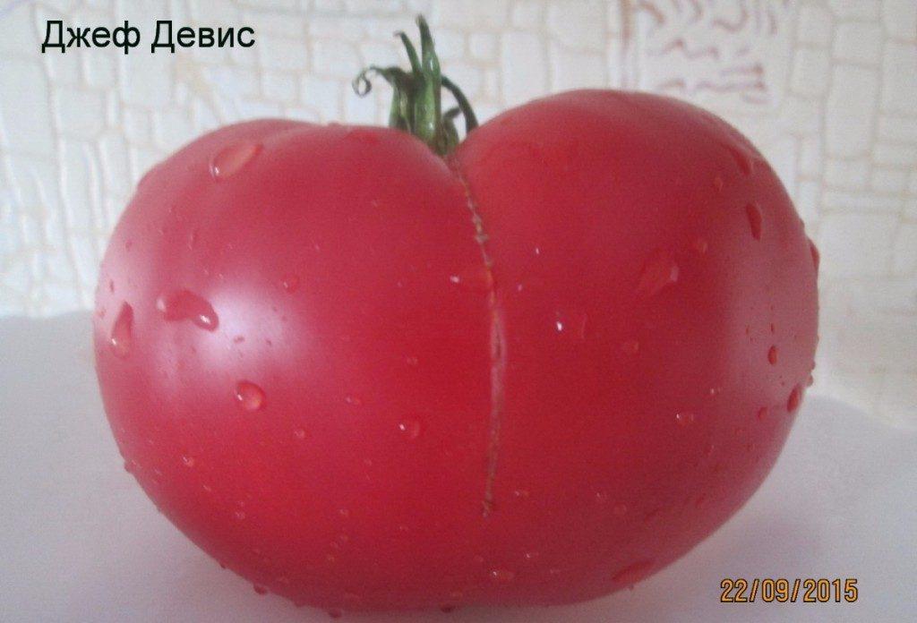 помидоры Джефф Девис фото