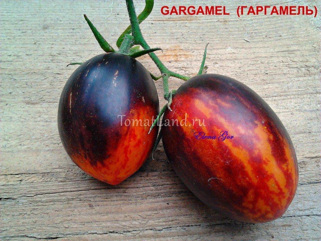 помидоры Гаргамель фото
