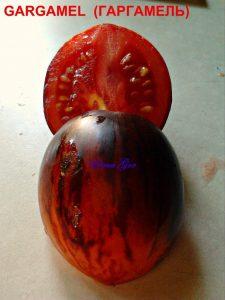 томат Гаргамель фото в разрезе