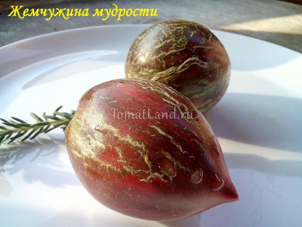 томаты жемчужина мудрости