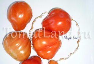 томаты канестрино фото