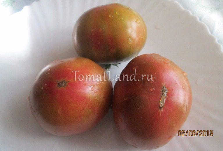 помидоры Капитан Лаки фото