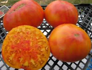помидоры Мэри Робинсон