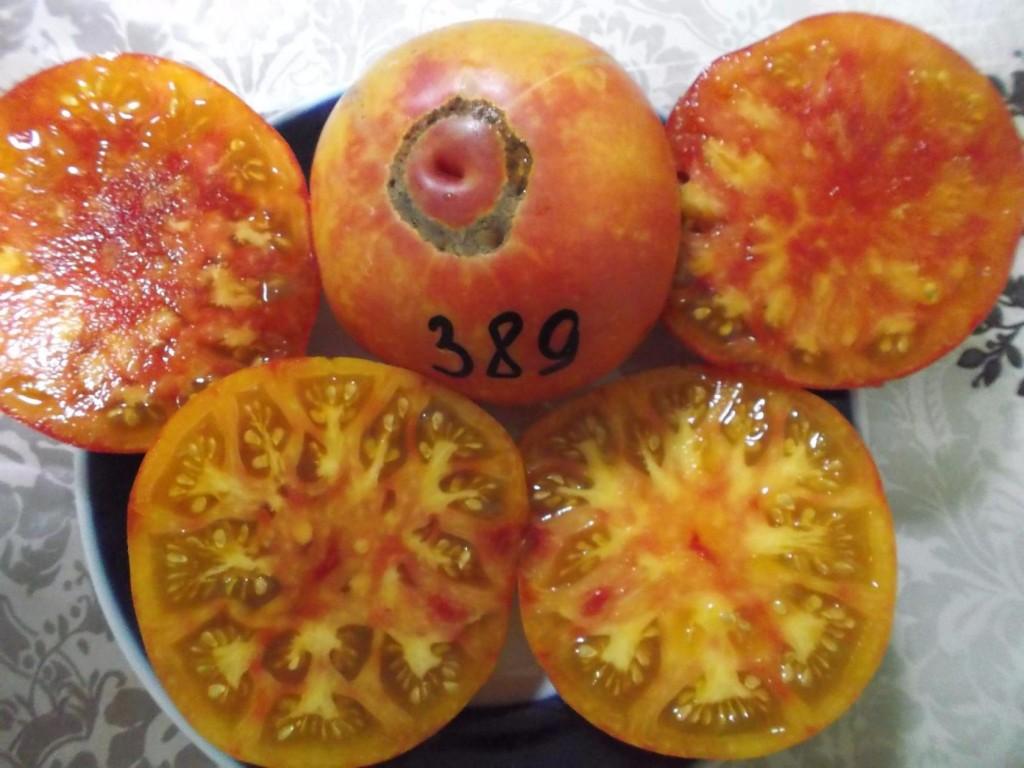 томаты мэри робинсон фото