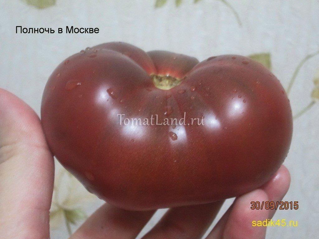 помидоры Полночь в Москве фото
