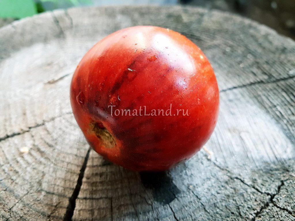 помидор темный тигр фото отзывы