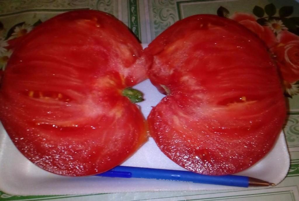 помидоры задница обезьяны фото