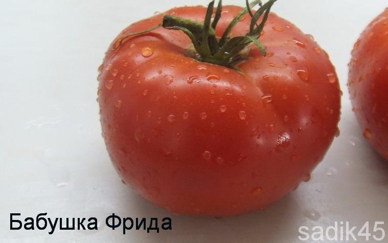 помидоры Бабушка Фрида фото