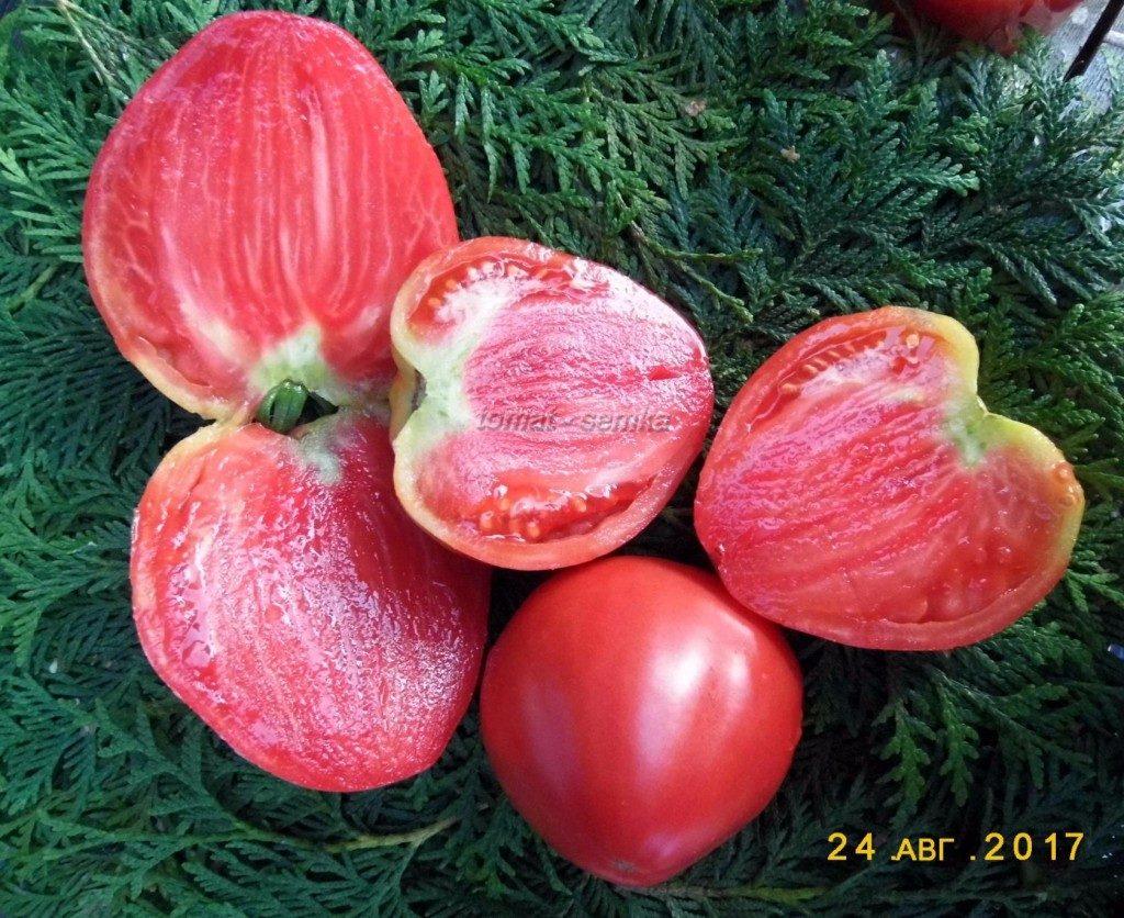 помидоры Чудо фото
