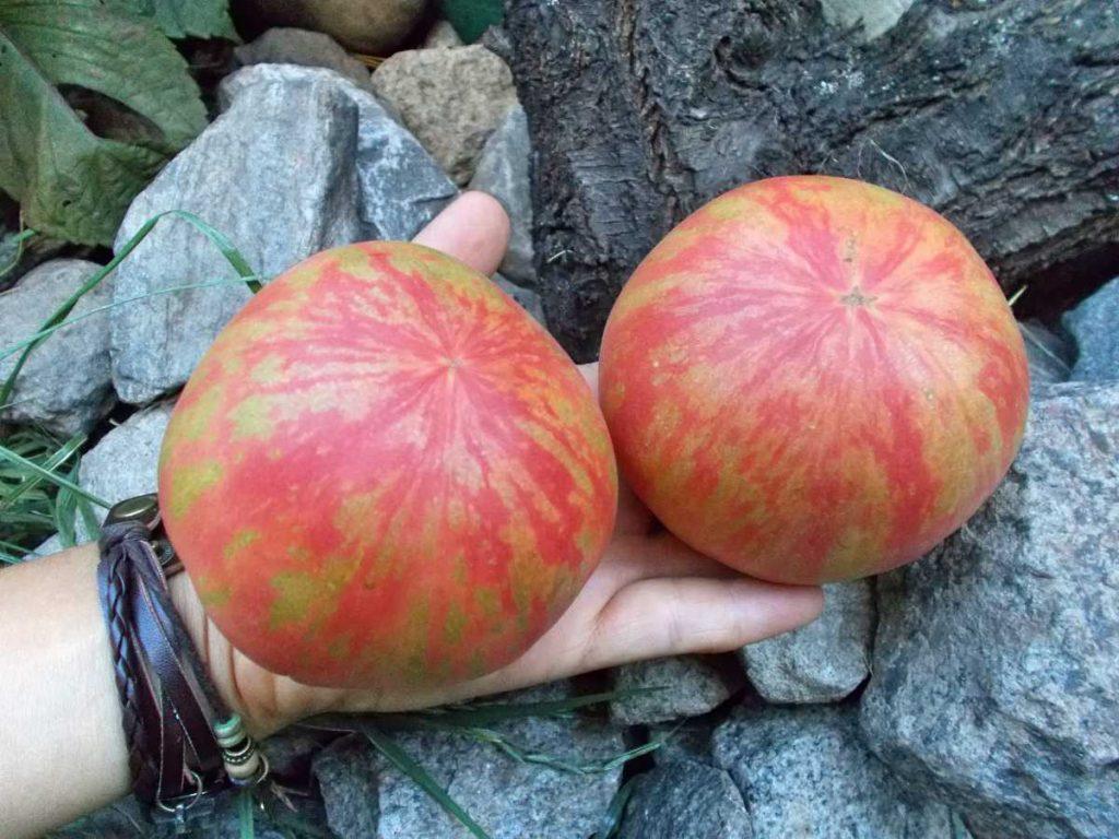 помидоры розовый пушистый кабан