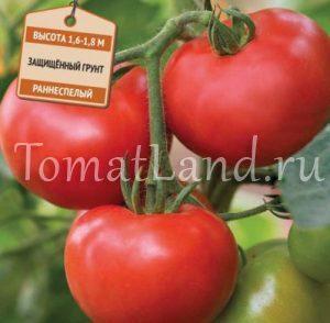 помидоры огонь фото