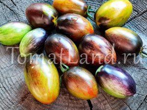 помидор атомный виноград фото отзывы описание