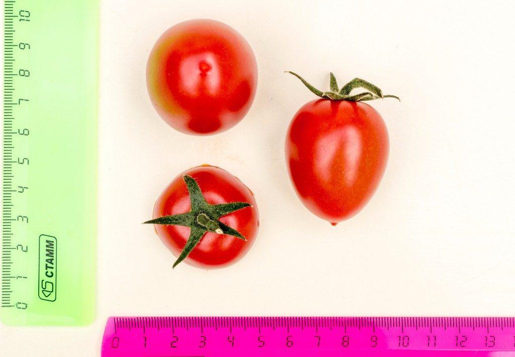 помидоры черри вера фото отзывы