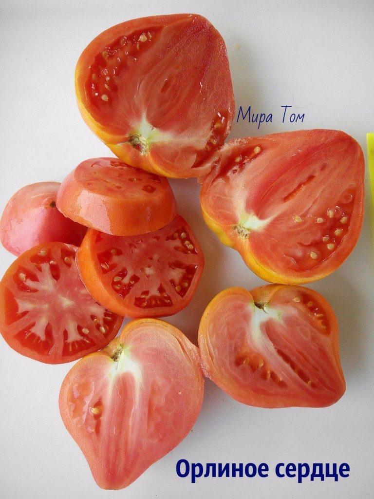 помидоры орлиное сердце фото
