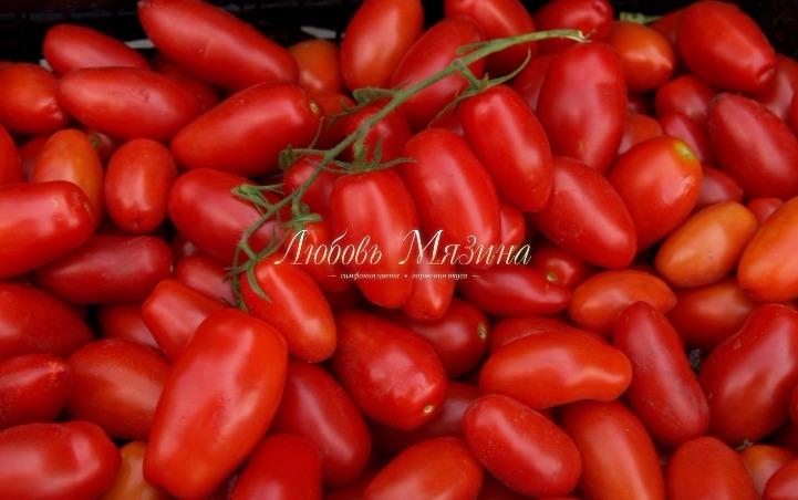 помидоры черрипальчики фото