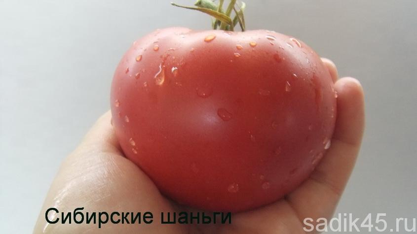 томаты сибирские шаньги