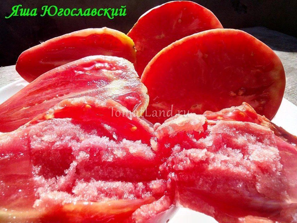 помидоры яша югославский фото характеристика