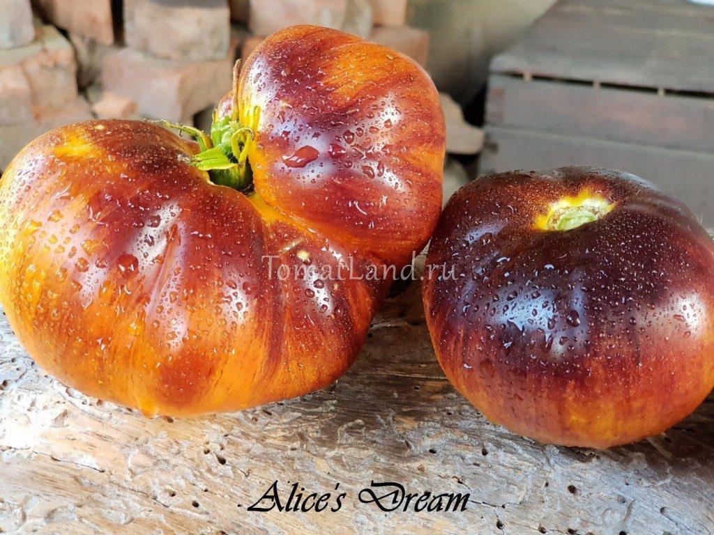 помидоры мечта алисы фото отзывы