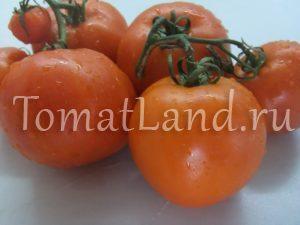 помидоры айсан фото