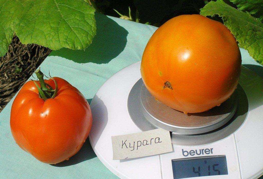 помидоры курага фото